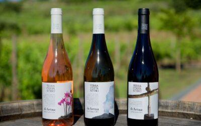 Vulkanske vine fra Etna